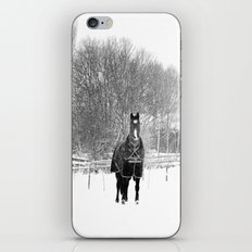 Horse in the Snow iPhone & iPod Skin