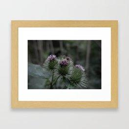 Wild burdock Framed Art Print