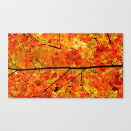 Sugar Maple Leaves in the Fall Light Canvas Print