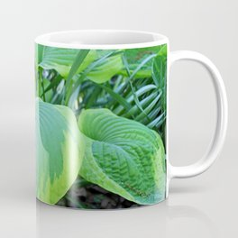 Hosta Plantaginea Coffee Mug