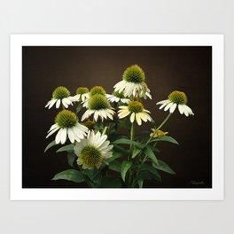 Wild White Coneflowers Art Print