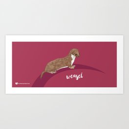 Weasel Art Print