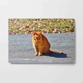 Neighborhood Cat Metal Print
