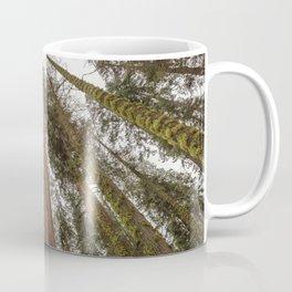 Sequoia Stretch - Nature Photography Coffee Mug