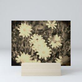 Desert Chicory Coachella Wildlife Preserve in Sepia Mini Art Print