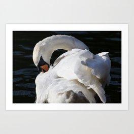 Peaceful Swan Art Print