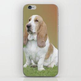 Portrait Of A Basset Hound iPhone Skin