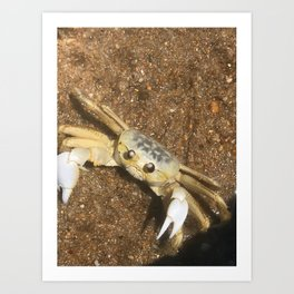 Ghost Crab of The Outer Banks Art Print