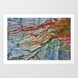 Climbing Plant on a Wall Art Print
