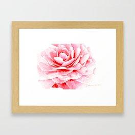 Watercolor Pink Camellia Framed Art Print