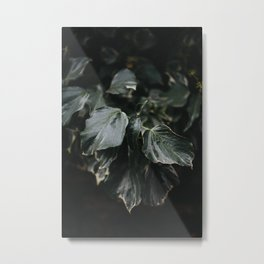 Dark green leaves Metal Print