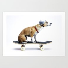 Skate Punk - Skateboarding Chihuahua Dog inTiny Helmet Art Print