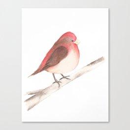 Chubby Finch Canvas Print