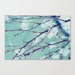Winter of February Canvas Print