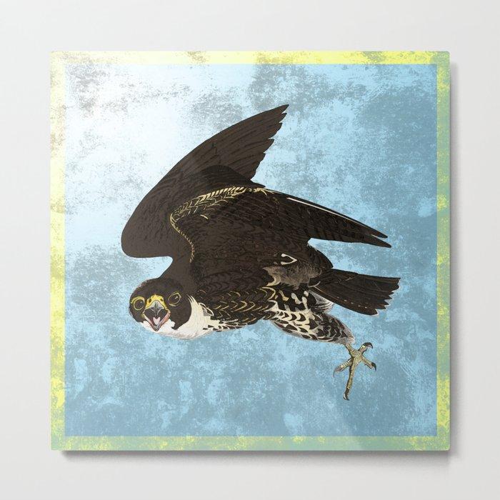 The hawk hangs perfect in mid air.. Metal Print