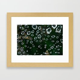 Spiderweb Water Droplets  Framed Art Print