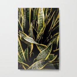 Serpentine Sansevieria Metal Print