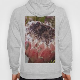 Feather Protea Hoody