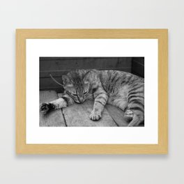 Street Photo - Cat - Black and White Framed Art Print