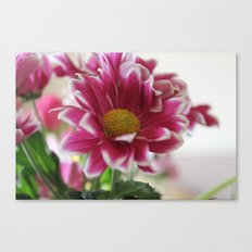 A Splash of Pink Canvas Print
