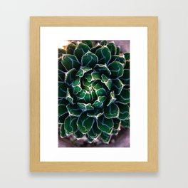 Queen Victoria's Agave Plant Framed Art Print