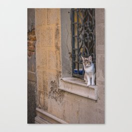 Cat in the street of Venice Italy Canvas Print