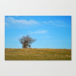 winter countryside with solitaire bush on horizon and blue sky Canvas Print