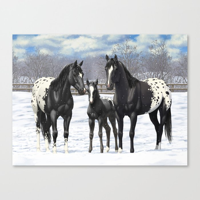 Black Appaloosa Horses In Winter Snow Canvas Print by csforest
