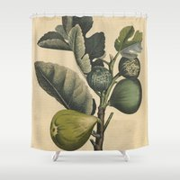 fig Shower Curtains featuring Fig by Connie Goldman