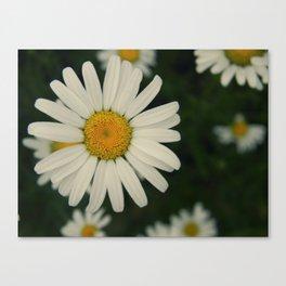 more daisies. Canvas Print