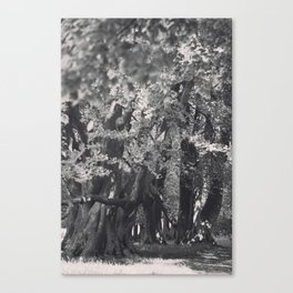Black and White Tree Avenue Canvas Print