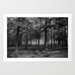 Black and white forest - North Kessock, Highlands, Scotland Art Print