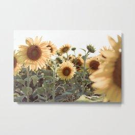 A Sunflower Story Metal Print