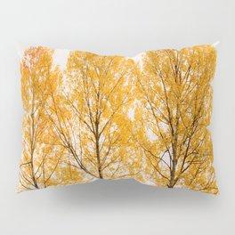 Aspen Trees #decor #buyart #society6 Pillow Sham