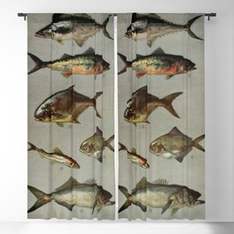 Illustrated Grocers Colorful Saltwater Game Fish Identification Chart Blackout Curtain