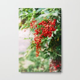 Fruit on vine Metal Print