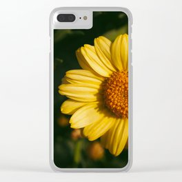 Yellow daisies in the garden Clear iPhone Case