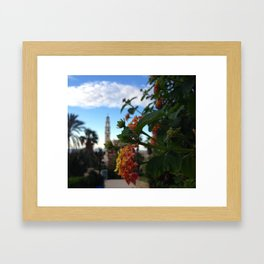 Jaffa Blooms  Framed Art Print