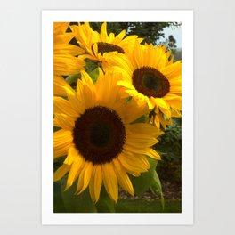 Bright Sunny Flower Art Print