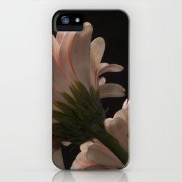 Exotic Pink on Black Gerbera Daisy Petals iPhone Case