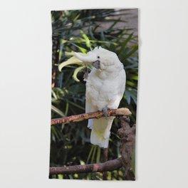 Sulfur-Crested Cockatoo Salutes the Photographer Beach Towel