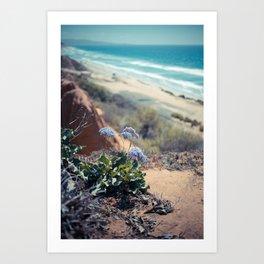 Torrey Pines Summer II Art Print