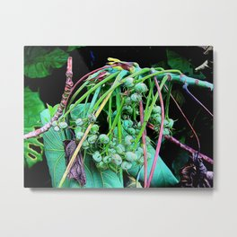 Abstract Plants 14 Metal Print