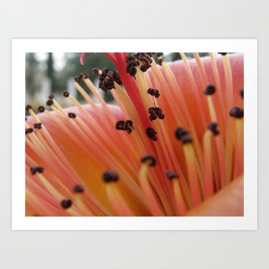 Red flower #1 Art Print