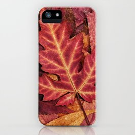 Colorful Autumn Maple Leaf Indian Summer Red iPhone Case