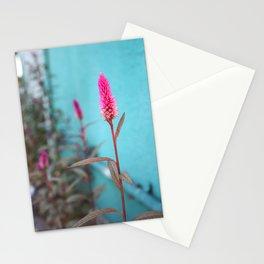 Fuchsia Stationery Cards