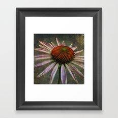 celestial coneflower Framed Art Print