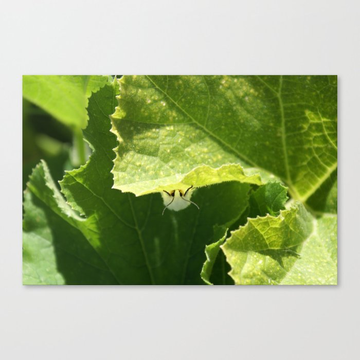 Peek-a-boo Moth Canvas Print