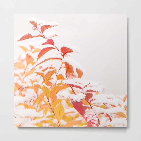 Snow covered red leaves Metal Print