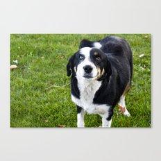 smiling dog Canvas Print